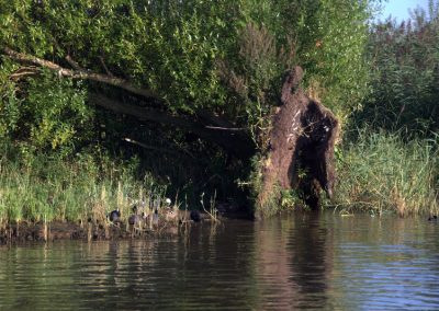 boom-omgevallen-erosie