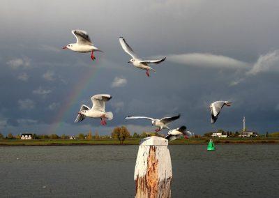dukdalf-meeuwen-regenboog