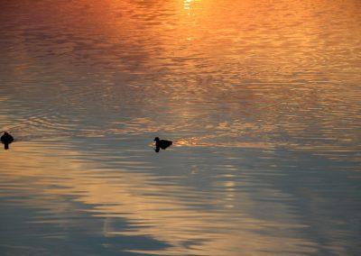 eend-water-avondzon
