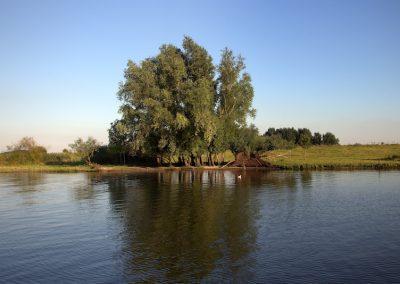 landschap-bomen-water